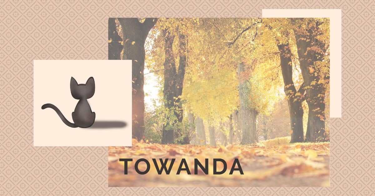 Towanda's Story